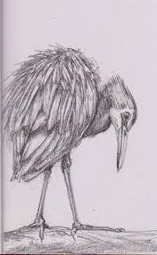 graphite sketches of animals children birds u0026 plants u2022 kezh