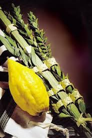 etrog for sale buy basic kosher israeli lulav etrog set israel catalog