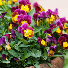 low light outdoor plants best winter flowers for color sunset