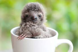 Cute Sloth Meme - cute sloth pictures adorable photos of sloths reader s digest