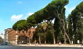 the trees of rome chinchillabluephotography