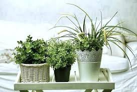 best plants for bedroom best plants to grow in bedroom best plants to grow in your bedroom