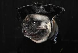 halloween new york city 2012 41 hilarious pictures of howl o ween dogs today com