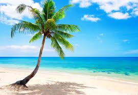 beach google search paradise pinterest beach beach google search
