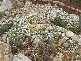 giardini rocciosi in ombra giardino roccioso e fiori di cactus paperblog