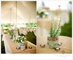 Potted Plants Wedding Centerpieces by Eco Friendly Wedding Decor On Couturecolorado Wedding