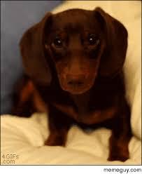 Puppy Dog Eyes Meme - puppy dog eyes meme guy