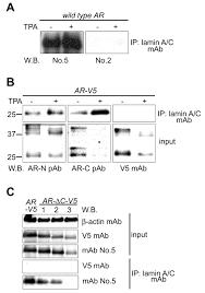 plasma membrane anchored growth factor pro amphiregulin binds a