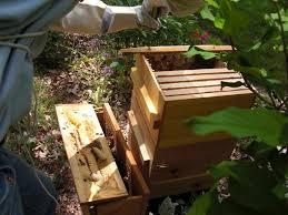 Backyard Beehive Backyard Bee Hive Blog May 2012