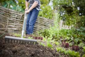 Home Vegetable Gardens by Fall Home Garden Gardening Ideas