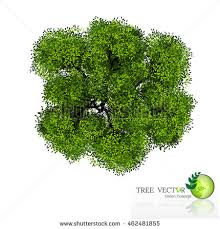 tree top view realistic stock vector 462481855