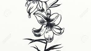 pencil sketch flower butterfly pencil drawings drawing pencil