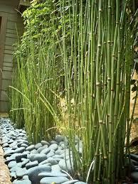 bambus fã r den balkon die besten 25 rock ideen auf band