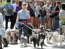 Daniel Radcliffe Meme - daniel radcliffe walking 12 dogs while smoking a cigarette