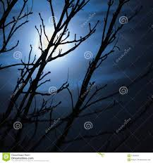 full moon in foggy dark night leafless trees silhouettes