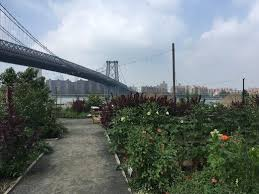 Urban Farm And Garden - explore amaro and herbalism on a waterfront urban farm atlas obscura