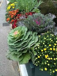 design ideas for fall containers and gardens costa farms