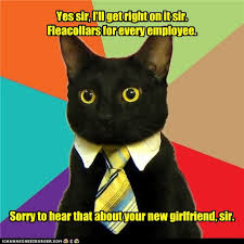Appropriate Memes - animal memes business cat not sure this is h r appropriate
