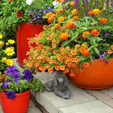 flower plants buy flowering plants online at nursery live largest plant nursery
