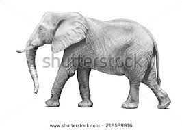 hand drawn elephant stock images royalty free images u0026 vectors
