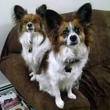 belgian shepherd malinois pronunciation 19 dog breed names you might be pronouncing wrong barkpost