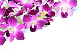 List Of Tropical Plants Names - tropical plant list garden list of plant names tropical