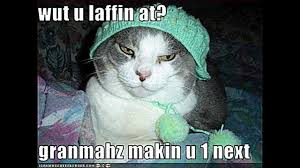 Funny Kitten Memes - 20 best of cute kitten quotes