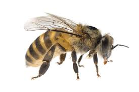 Raising Bees In Backyard by Need A Hobby Raise Bees And Help The Garden State