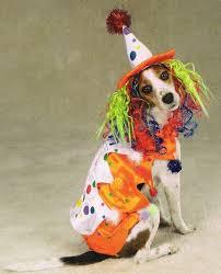 Dog Halloween Costumes 13 Dogtober Monster Mash Images Dog Halloween