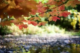 enjoy beautiful jackson park this thanksgiving weekend ptbocanada