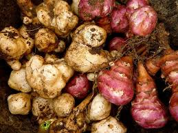 A List Of Root Vegetables - 7 uncommon vegetables for your produce bucket list whole30 day 25