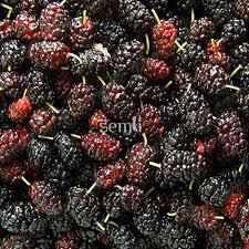 buy fruit online buy shahtoot mulberry black online fresh fruits vegetables