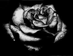 white roses for sale black roses for sale 17 cool wallpaper hdflowerwallpaper