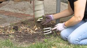 how to clean out a weedy flower garden garden space youtube