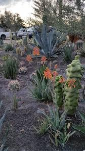 Urban Garden Phoenix - fundraiser by tim bishop dig it urban gardens and nursery