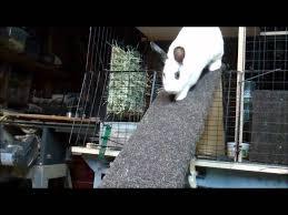 Rabbit Hutch Ramp Stumper The Rabbit