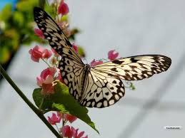 pretty wallpapers for desktop pretty butterfly desktop wallpaper screen saver butterfly