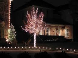 indoor lights ideas indoor tree plant window