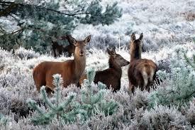 deer family save animals peta