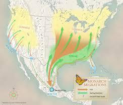paul mirocha design and illustration where do monarch butterflies