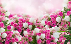 widescreen collection of flower on hd with wallpaper full pics