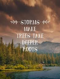 best tree quotes sayings and quotations quotlr