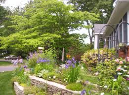 native plants landscaping healthy yards ocean county soil conservation district