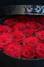 buy roses buy roses for valentines day quotes wishes for s week
