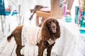 your handmade wedding dog hobbycraft blog