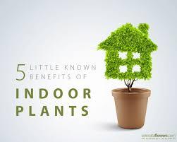 benefits of houseplants 5 little known health benefits of indoor plants gardening cosmo