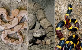 what kind of snake is this how to identify common snakes in the