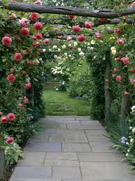 plants that grow like vines tags magnificent best plants for