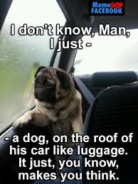 I Don T Know Man Meme - image 414896 introspective pug know your meme