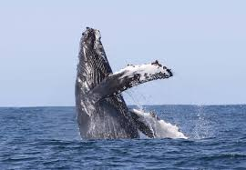 whale watching snæfellsnes possible sightings of porpoises and